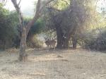 சரிஸ்கா சுற்றுலா - ஈர்க்கும் இடங்கள், செய்யவேண்டியவை மற்றும் எப்படி அடைவது