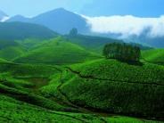 தேவிகுளம் - கேரளாவின் பிரசித்திபெற்ற மலைவாசஸ்தலத்துக்கு போலாமா?