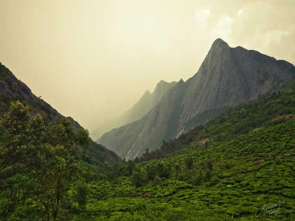 கொலுக்குமலை-கண்டதுண்டா இப்படியொரு பேரழகை