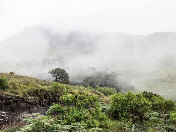 Trekking In The Misty Mountains At Nishani Motte