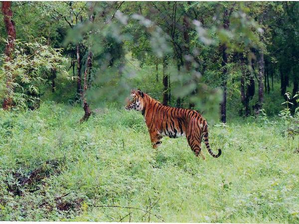 பெங்களூர் டூ சிக்மகளூரின் பத்ரா