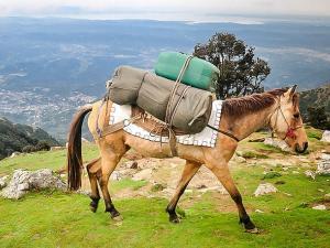 Lets Go Bhagsu Himachal Pradesh
