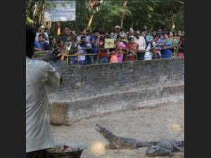 Lets Go Crocodile Park At Mamallapuram