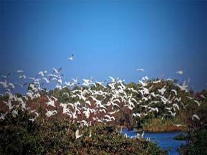 Lets Go Vedanthangal Bird Sanctuary