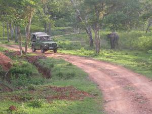 Road Trip From Bengaluru Wayanad