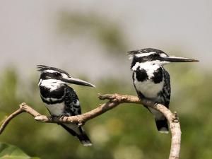Bird Sanctuaries Karnataka When Where How Go