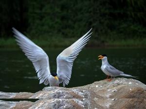 Let S Go Bird Sanctuary At Karnataka