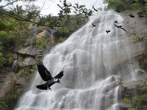 The Anguthi Waterfalls Best Attraction Javadhu Hills