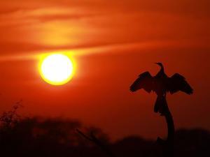 Top 6 Bird Sanctuary