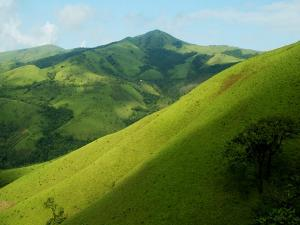Kemmangundi Forest Travel Guide Attraction Things Do