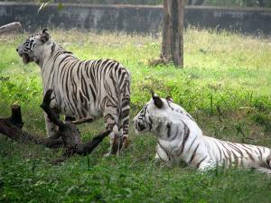 Chhatbir Zoo Entry Fee Visit Timings Things Do More