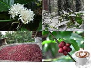 Beautiful Coffee Forests India