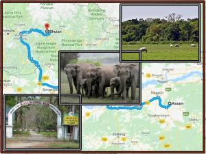 Let S Go Manas National Park Near Assam