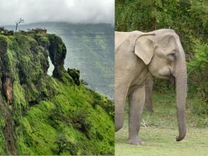 Elephant S Head Point Travel Guide Attractions Things Do