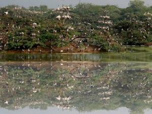 Uppalapadu Bird Sanctuary Guntur Entry Fee Timings At