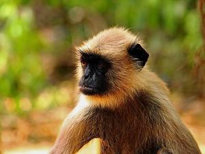 Nandankanan Zoo Park Travel Guide Entry Fee Attractions H
