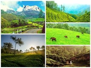 Bangalore Munnar The Most Amazing Road Trip