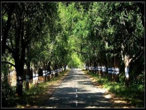 A Trip From Coimbatore Kodaikkanal