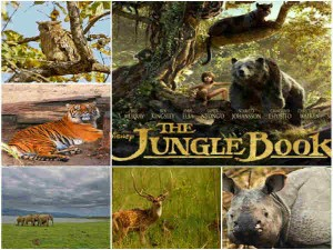 A Jungle Book Tour India