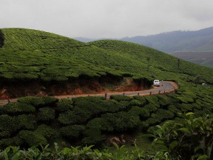 Munnar Photo Gallery 000745 Pg