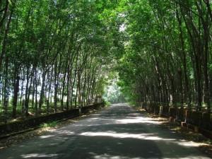 Best Roadways A Long Drive Tamil Nadu
