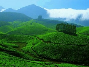 Lets Go Devikulam Kerala