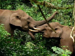 Best Destinations Elephant Safaris India Tamil