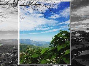 Lets Go Nagaland Forest Tour