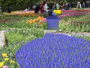 Valley Flowers Trek Enjoy Whole Five Days