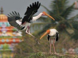 Let S Go Uppalapadu Bird Sanctuary Near Guntur
