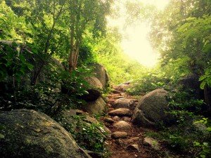 Chennai To Yelagiri Come And Explore The Call Of The Wi