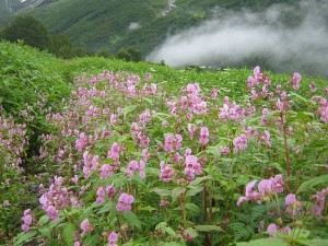 Interesting Facts About Uttarakhand Travel Facts Cultu