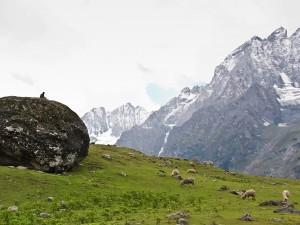 Lambasingi Kashmir Andhra Pradesh Snowfall Travel Guide Mo