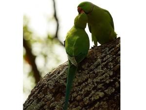 Kokrebellur Bird Sanctuary Timings Things Do More