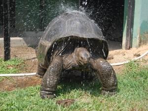Alipore Zoo Kolkata Timing Attractions Ticket Entry Fee
