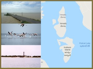 Pulicat Lake Chennai Entry Fee Visit Timings Things Do