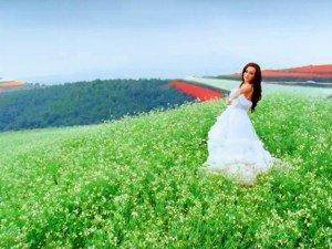 Kas Pathar Flower Valley Maharashtra Best Time Visit How Reach