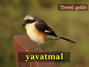 Yavatmal Travel Guide Attractions Things Do How Reach