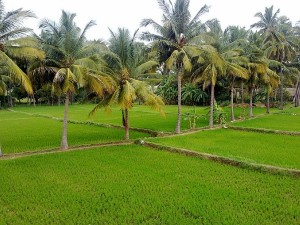 Best Places Visit Erode Things Do How Reach