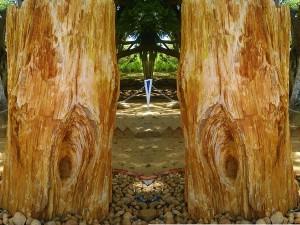 National Fossil Wood Park Tiruvakkarai Entry Fee Things