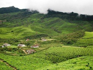 Devikulam Attractions Things To Do And How To Reach