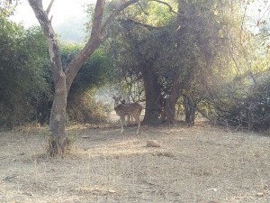 Sariska Island Travel Guide Places To Visit Things To Do