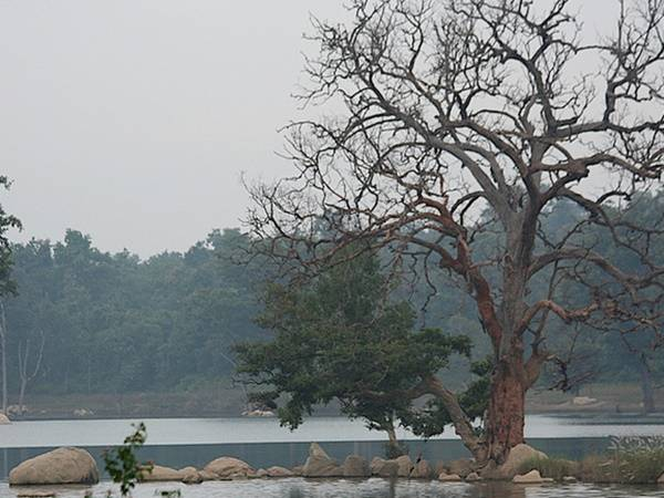 Lets Go Jungle Book Forest Called As Pench National Park