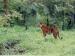 சிவகிரி சுற்றுலா - ஈர்க்கும் இடங்கள், செய்யவேண்டியவை மற்றும் எப்படி அடைவது